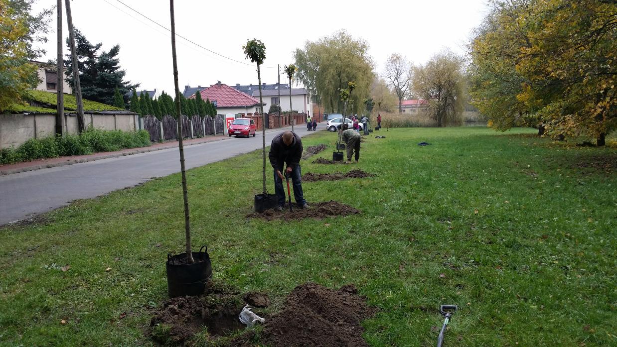Sadzenie drzew przy stawach - 22.10.2016