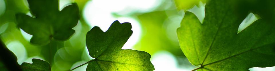 Zielone-Plewiska